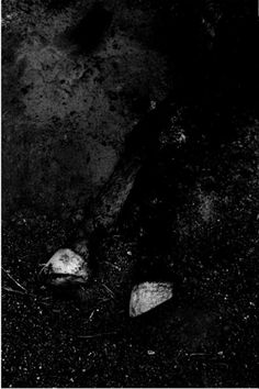 Paulo Nozolino, Dead Mule