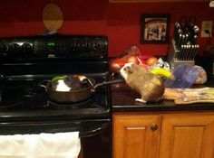 7 stuff my guinea pig does making stew