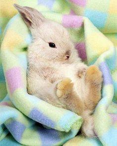 Comfy bunny #roedores #conejo #rabbit #mascotas