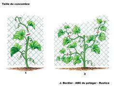 Tailler les concombres et les cornichons - Les bons gestes