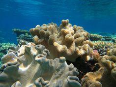 Mein 3-tägiger Tauchurlaub im Great Barrier Reef - PLANETLEBEN