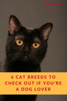 8e2d64f312 55 Best All About the Breeds images