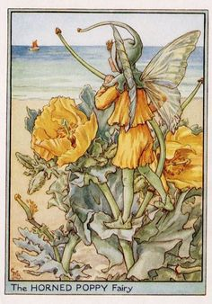 Horned Poppy Flower Fairy Vintage Print c1950 by TheOldMapShop