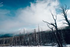 Forest, Trees, Forest, Woods, Winter, Snow, Cold #forest, #trees, #forest, #woods, #winter, #snow, #cold