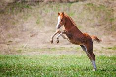 Foal jumping mystery fence !!!! :)