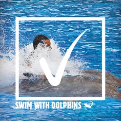 Bucket List Item: Swim with dolphins. already done this and i recommend doing this to anyone that has a chance to