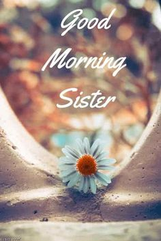 Looking for Good Morning Wishes for Sister? Start your day by sending these beautiful Images, Pictures, Quotes, Messages and Greetings to your Sis with Love. Good Morning Sister Images, Beautiful Good Morning Wishes, Good Night Sister, Cute Good Morning, Good Morning Photos, Good Morning Friends, Morning Pictures, Saturday Morning Quotes, Morning Qoutes