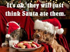 Do you make your own dog treats? How to make 5 quick & healthy dog treats at home. Full ingredients lists and short recipes to make these treats. Funny Christmas Pictures, Christmas Jokes, Christmas Animals, Christmas Cats, Merry Christmas, Christmas Time, Christmas Photos, Christmas Captions, Naughty Christmas