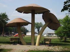 Vilna, Alberta - World's largest mushrooms