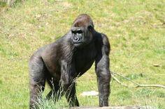 Доколко още сме маймуни? - Първи Български Зоопортал