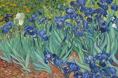 Enjoy a breath of fresh air every time you view our Irises by Van Gogh Wall Mural. Irises was painted by iconic Dutch artist Vincent van Gogh in May 1989, while he was staying at the Saint Paul-de-Mausole asylum.