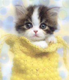 Cute Kitten Overload!