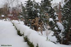 Wilcza Gora Garden