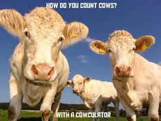How do you count cows? With a cowculator of course.  Funny animal meme photo.