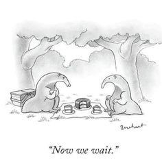 "Premium Giclee Print: ""Now we wait."" - New Yorker Cartoon by David Borchart : New Yorker Cartoons, Funny Cats, Funny Animals, Funny Memes, Hilarious, Jokes, Thing 1, Humor Grafico, Pictures Of The Week"