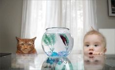 I think this baby boy and cat have something fishy planned