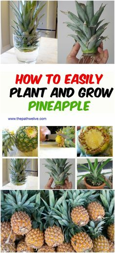 How To Easily Plant And Grow A Pineapple