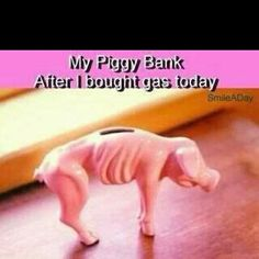 Piggy Bank...  Who feels this way after filling your car up with gas  ????