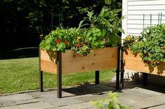2X4 Elevated Cedar Planter Box