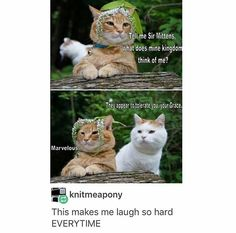 These Cats Are Hilarious funny cat lol humor funny pictures funny cats funny photos funny images funny animal pictures hilarious pictures Funny Animal Memes, Cute Funny Animals, Funny Animal Pictures, Funny Cute, Cute Cats, Funny Memes, Funny Pics, Funny Stuff, Pretty Cats