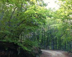 Mouresi forest, Pelion, Greece