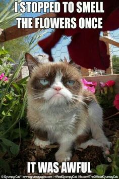 Your rose garden is like your family. It's full of pricks ha ha ha. it's only funny if grumpy cat says it. Grumpy Cat Quotes, Funny Grumpy Cat Memes, Cat Jokes, Funny Animal Memes, Animal Quotes, Funny Cats, Funny Animals, Funny Memes, Funniest Animals