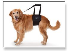 Dog Rear Sling Harness | Help Older Dogs with Mobility and Balance | GingerLead