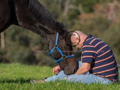 """You'll find her in a paddock somewhere just out of town. Australia's unbeaten champion Black Caviar is learning to be a horse again- not getting up before dawn for track work, relaxing with a horsey mate in lush green surrounds and getting a bale of hay every now and then"" ~ From the HeraldSun."