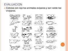 Resultado De Imagen De Ficha Animales Herbívoros Carnívoros Y
