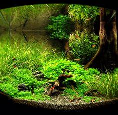 Nano Tank - Forest Floor
