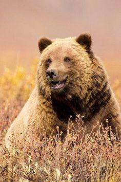 smiling bear....
