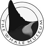 The Whale Museum - meet the whales