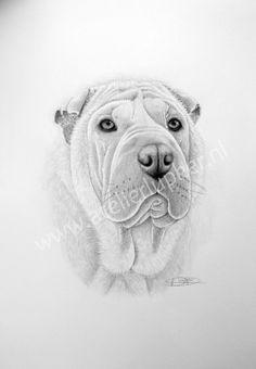 Kleurplaten Realistische Dieren 380 Beste Afbeeldingen Van Kat En Hond Animal Paintings