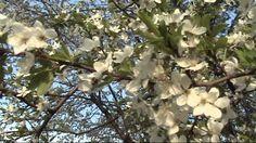 Весна_ Пасха _Троица