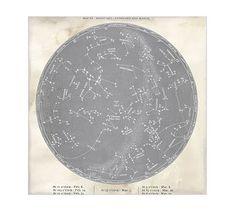 Vintage Astrological Prints , Gray #potterybarn