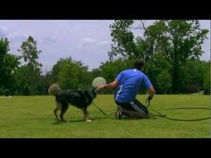 ▶ Do you want your dog to stay with you off leash? - YouTube