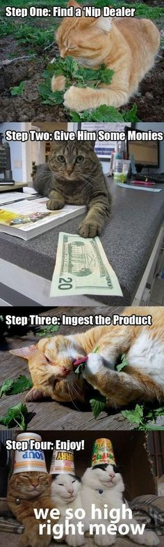 We are so high right meow.
