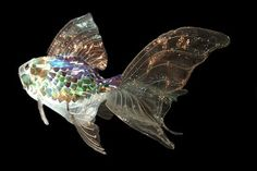 Artist's Cristins and Gustavo created this fish from old CD's, clothing and plastic bottles.