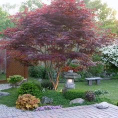 japanese maple. Love it! Small tree for front yard.