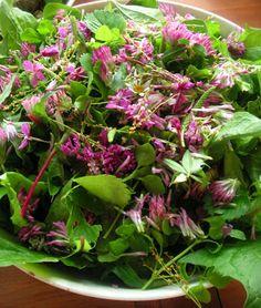Herkkusuun lautasella-Ruokablogi: Nannan rikkaruohoista salaatti
