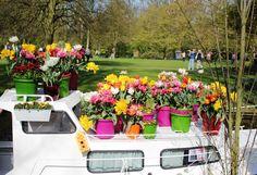 many flowers and the elho algarve cilindro on the Dutch Keukenhof