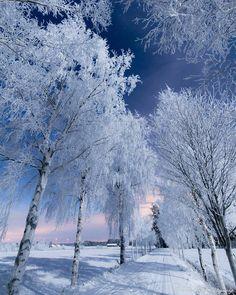 Finnish winter ☃️Photo by @jukkarisikko