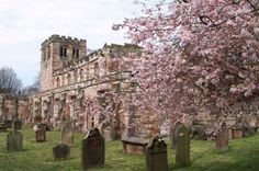 Matching sandstone and spring blossom of the medieval church of St Lawrence, Appleby-in-Westmorland, The Eden Valley, East Cumbria.