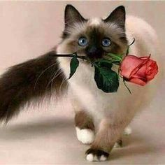Raindrops on Roses & Whiskers on Kittens 💕 Kittens And Puppies, Cute Cats And Kittens, I Love Cats, Crazy Cats, Cool Cats, Kittens Cutest, Animals And Pets, Baby Animals, Cute Animals