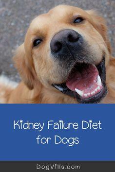 18 Kidney Disease Ideas Kidney Disease Cat Diseases Cat Care