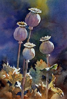 """Sunlit Poppy Seed Heads,"" watercolor by Ann Mortimer. Watercolor And Ink, Watercolour Painting, Watercolor Flowers, Painting & Drawing, Watercolours, Illustration Botanique, Illustration Blume, Botanical Illustration, Art Floral"