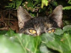 Last Wednesday was Feral Cat Day -- an event you may not have noticed, but one that raises ...