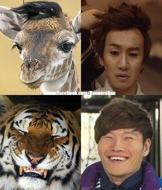 Giraffe and Tiger