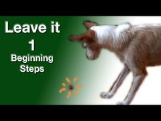 ▶ Leave it 1- the most important things to train- clicker dog training - YouTube