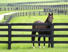 Article on building a horse fence, equine fence, fencing equestrian property, fencing acreage, how to build a fence for horses Pasture Fencing, Ranch Fencing, Horse Fencing, Farm Fence, Dog Fence, Backyard Fences, Rustic Fence, Fence Landscaping, Fence Gate